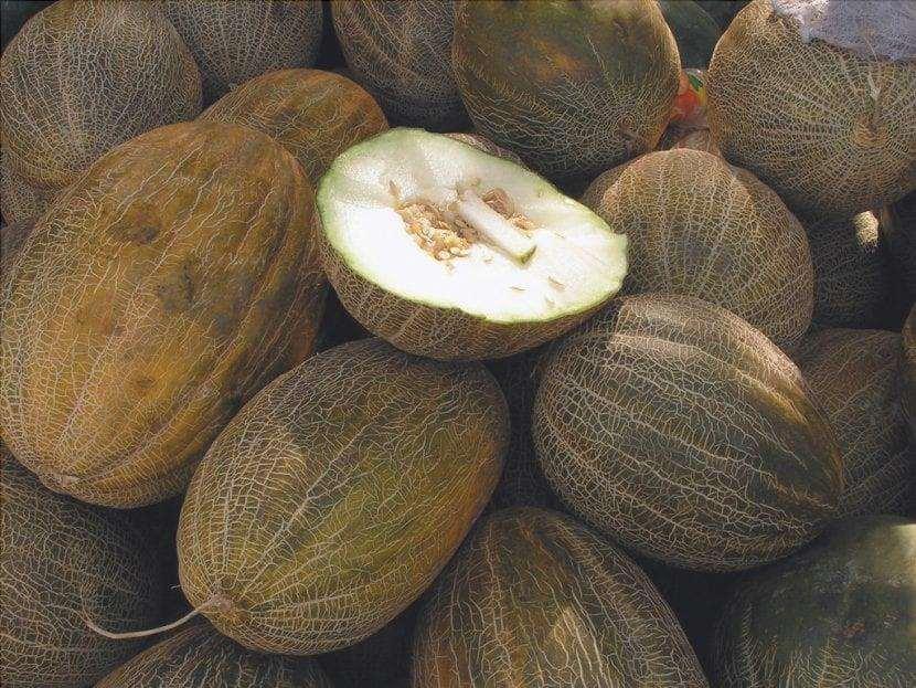 Il melone piel de sapo è una pianta