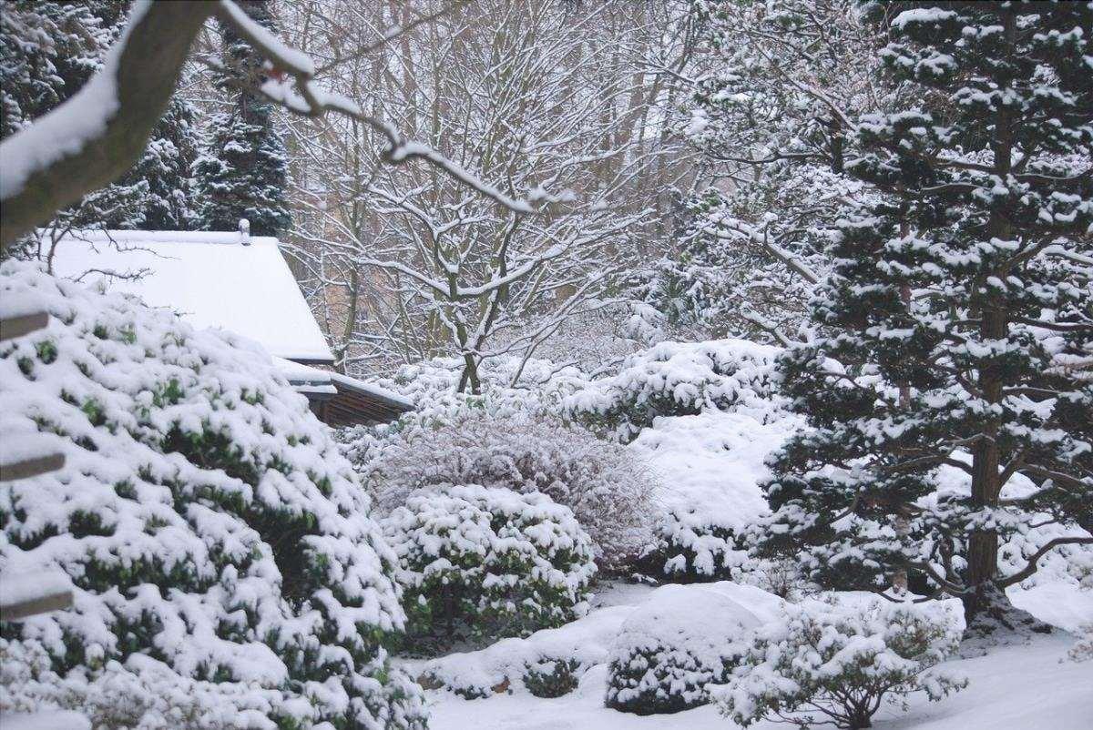 Ci sono molte piante da esterno che sopravvivono all'inverno