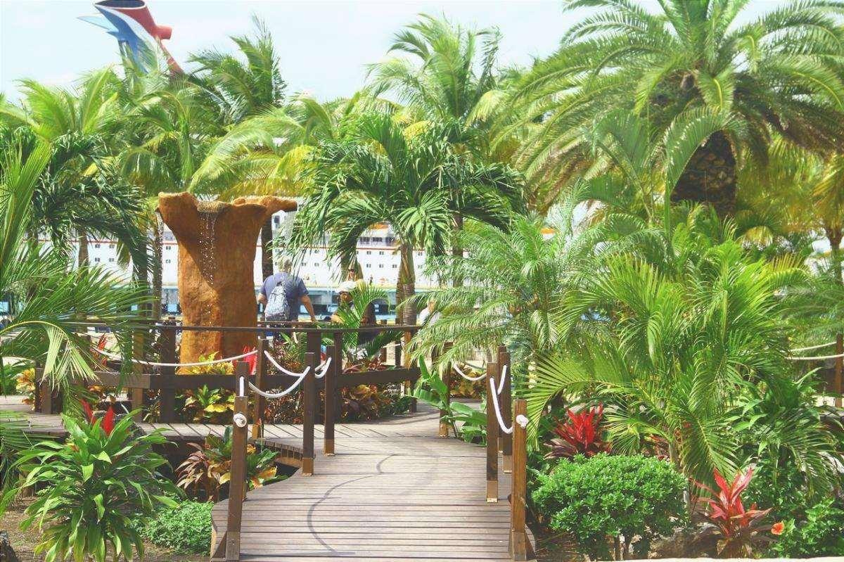 Ci sono molte palme da esterno ideali per un giardino