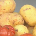 patatas y tomates para realizar comida