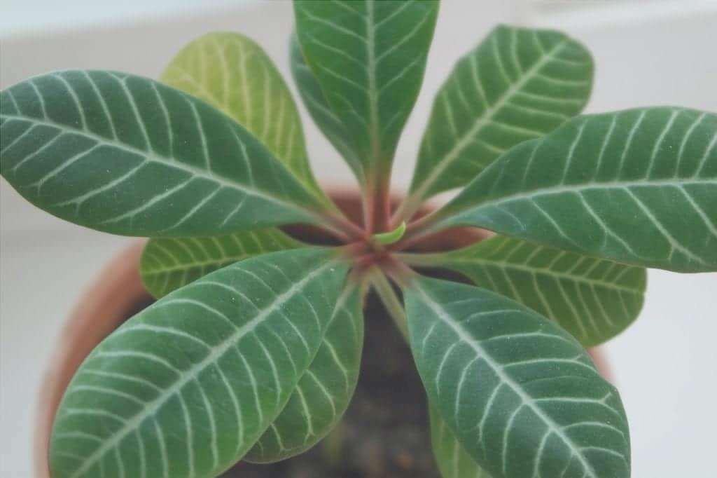 Le piante d'appartamento sono pulite regolarmente