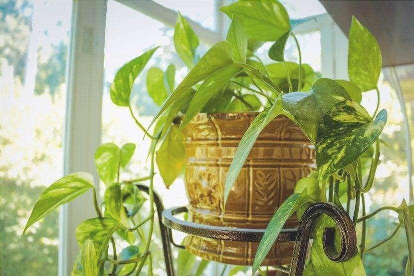 Le piante d'appartamento hanno bisogno di luce