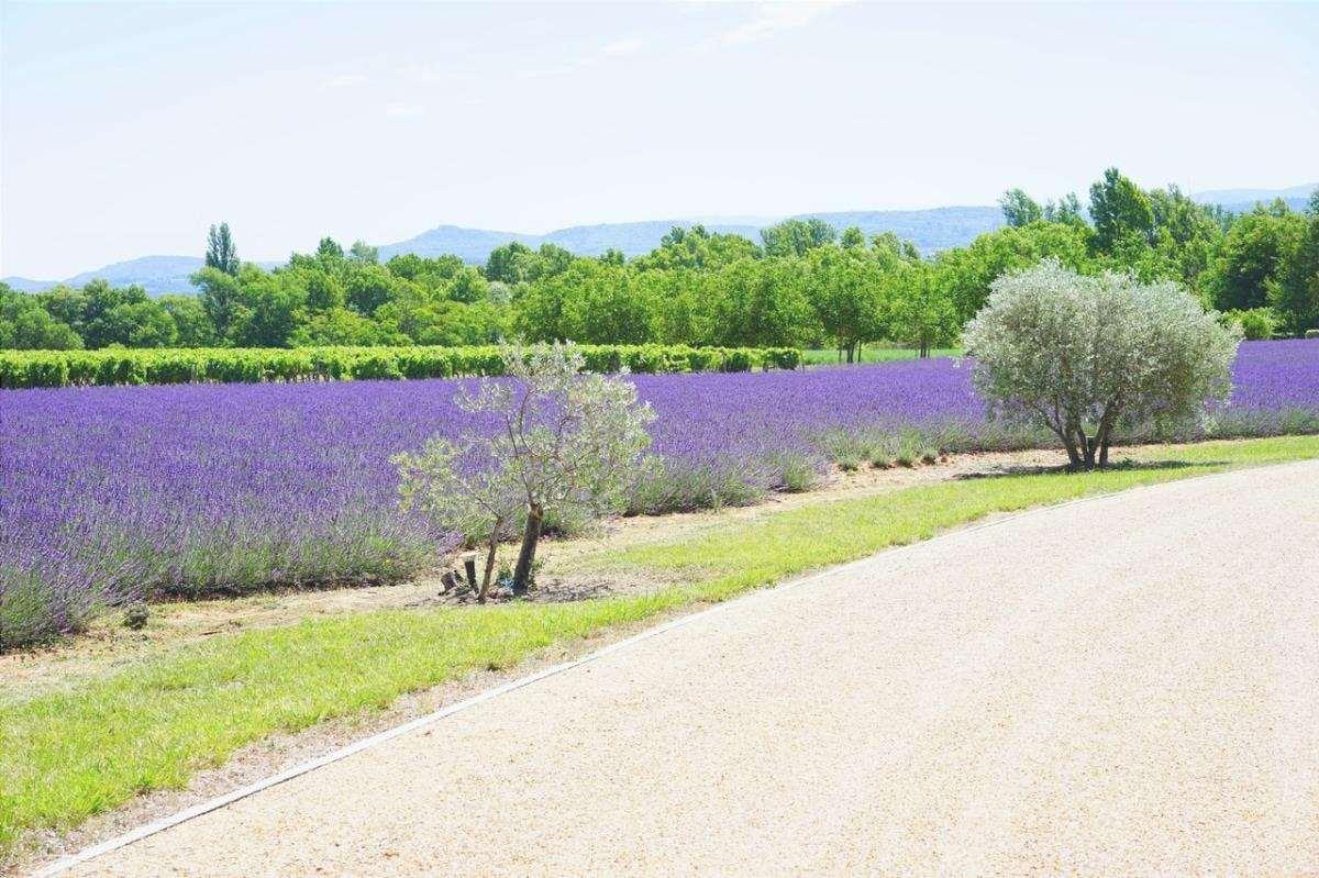 Ci sono molte piante che puoi mettere nel tuo giardino aromatico