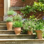 plantas en maceta de terracota
