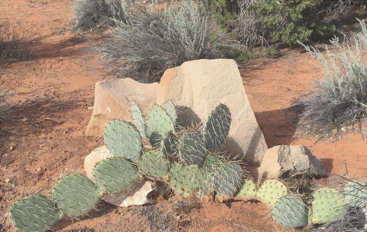 I cactus sono piante resistenti alla siccità.