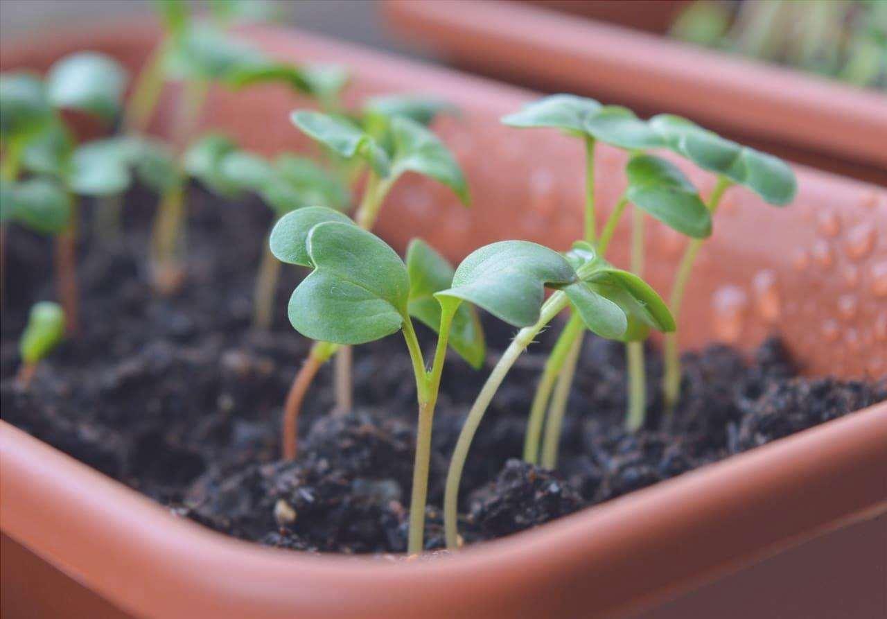 Le fioriere possono essere usate per piantare