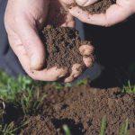 por que es tan importante la tierra para las plantas 1