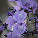 preciosas flores con forma de trompeta