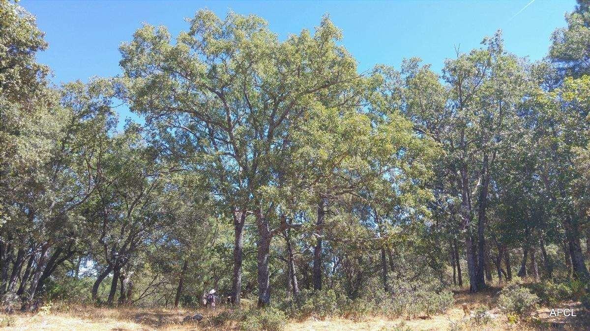 querceto nella penisola iberica