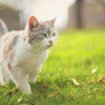 repelente para gatos 1