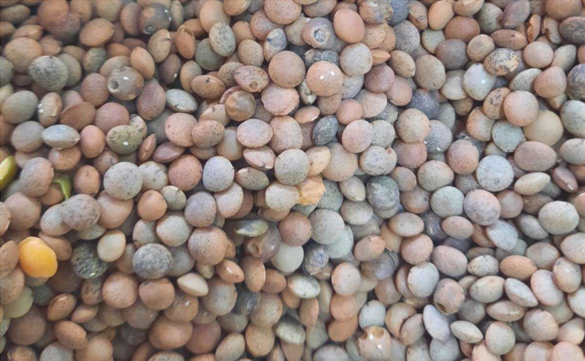 Ci sono molti semi che possono germogliare in casa.