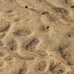 suelo arenoso