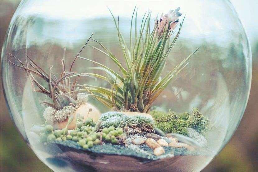 terrario con piante