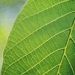 tipos de hojas de arboles