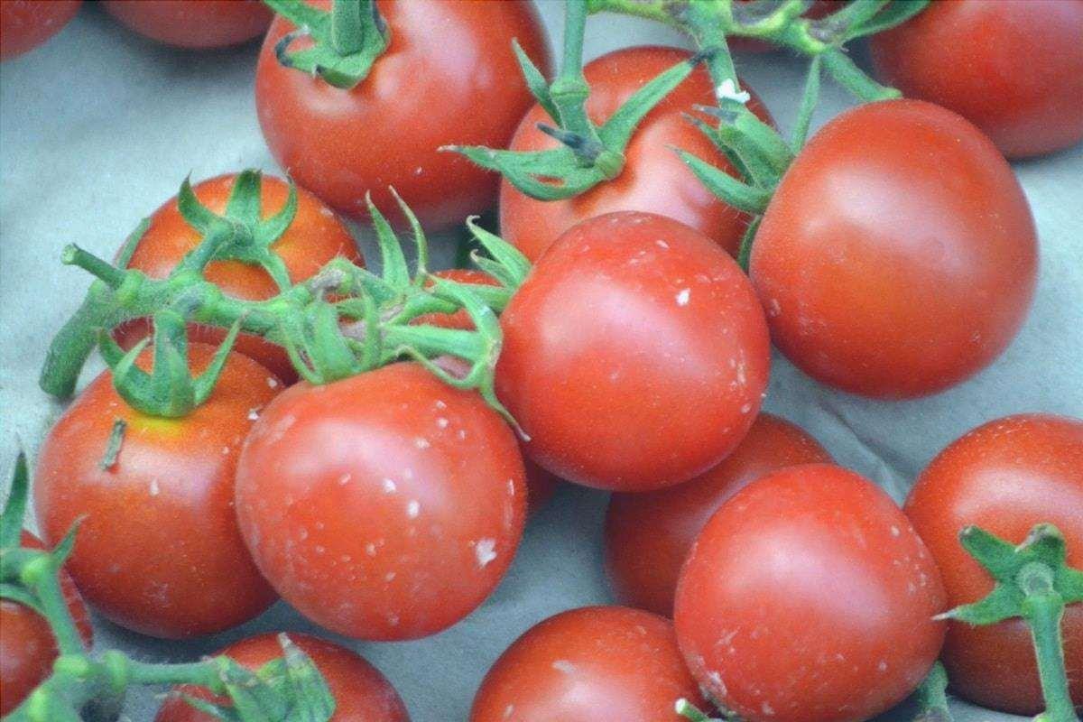 Il pomodoro ciliegia è piccolo