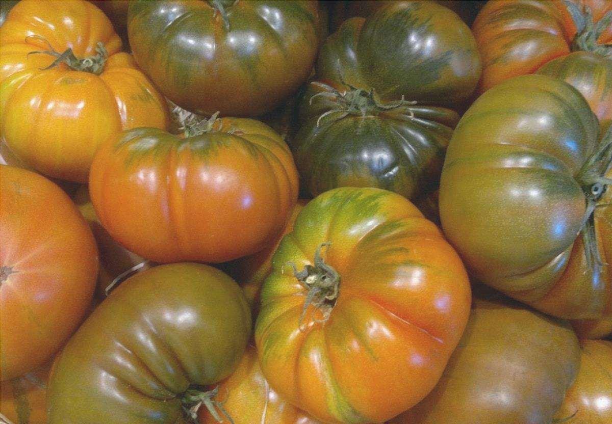 Il pomodoro raf è molto usato nelle insalate.