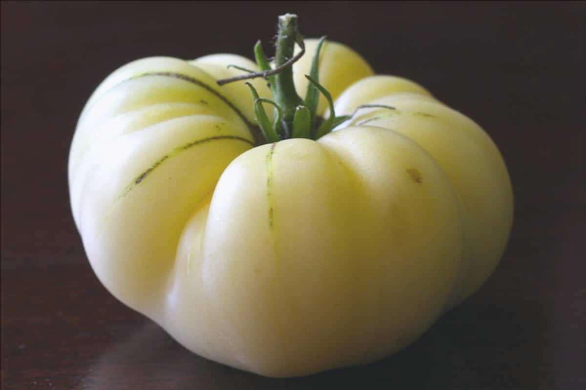 Pomodoro 'White Beauty', una varietà di pomodori di colore chiaro