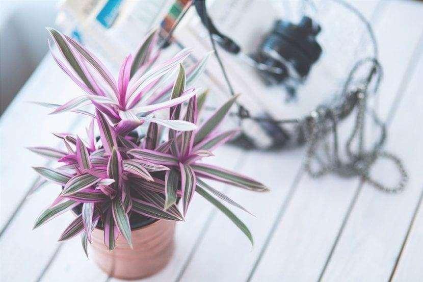 Le piante d'appartamento non sono difficili da curare