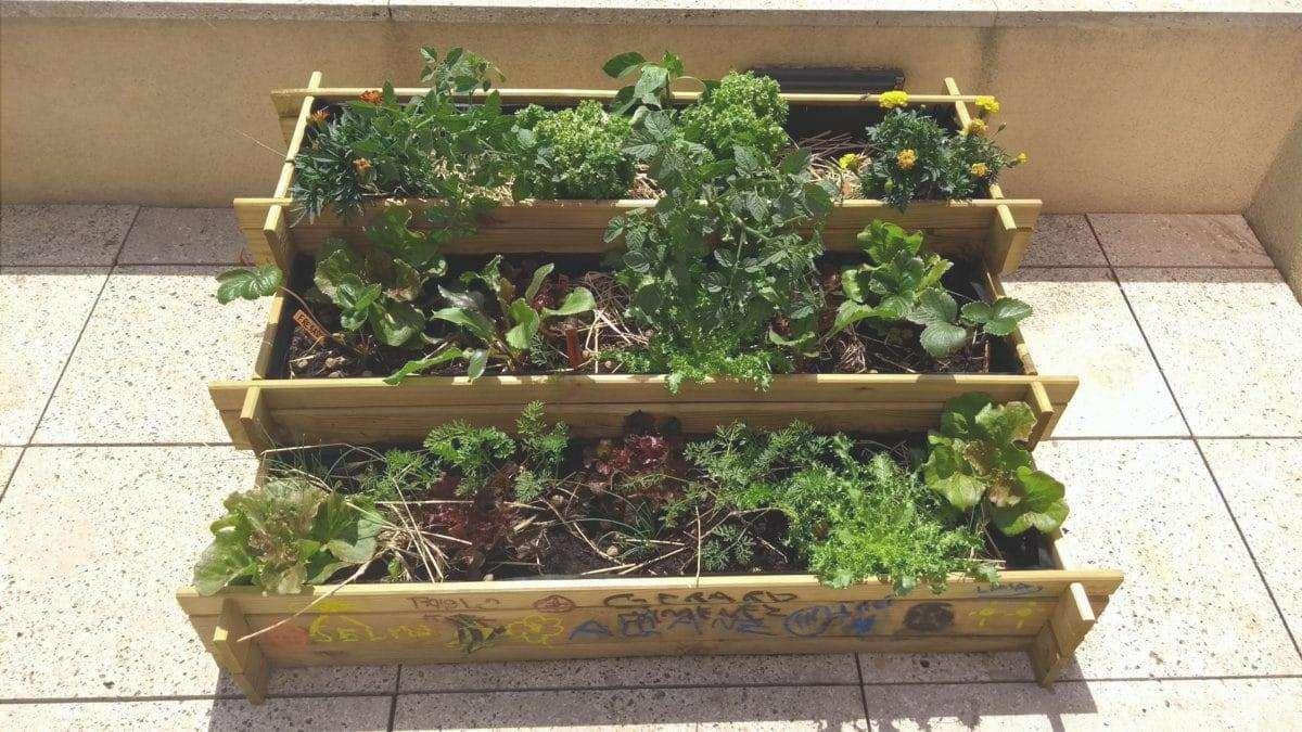varietà di colture in casa